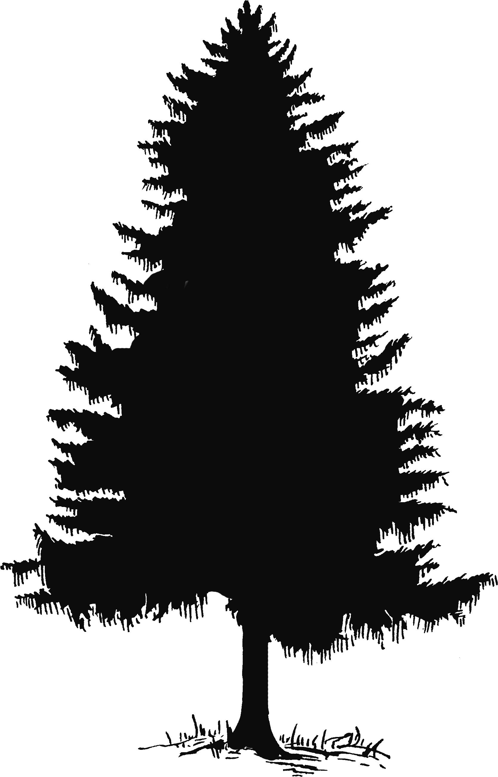 Cedar tree silhouette clipart vector Cedar Tree Silhouette Clip Art Cedar tree drawing - clipart | trees ... vector