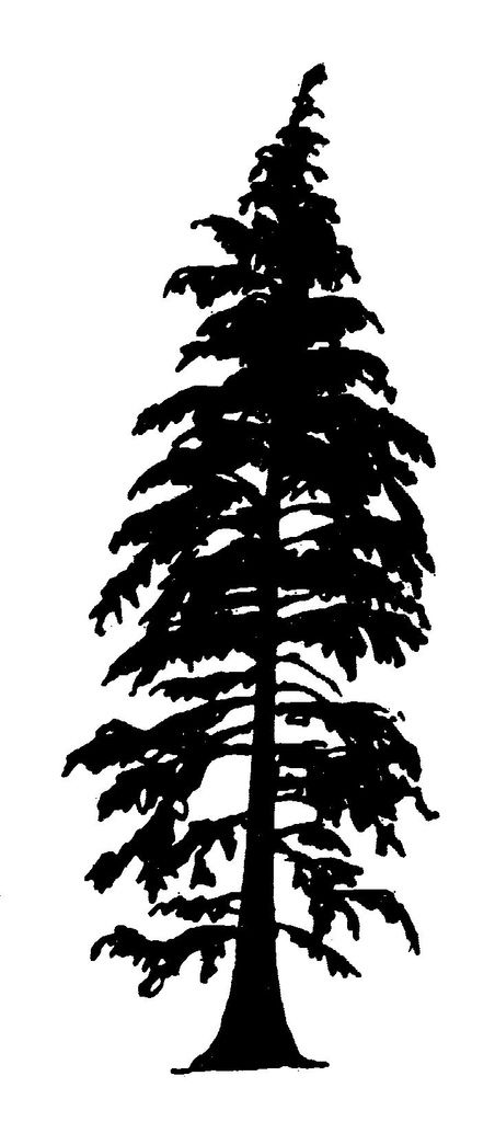 Cedar tree silhouette clipart graphic download cedar tree silhouette with roots - Google Search | tootoo ⋒ | Cedar ... graphic download