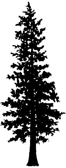 Cedar tree silhouette clipart vector stock Free Cedar Tree Cliparts, Download Free Clip Art, Free Clip Art on ... vector stock