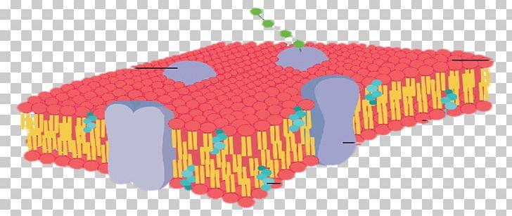 Cell membrane clipart picture transparent download Cell Membrane Biological Membrane Membrane Fluidity PNG, Clipart ... picture transparent download