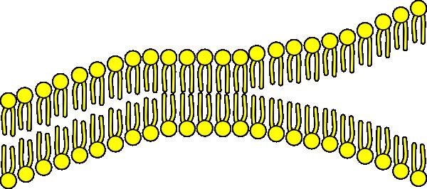 Cell membrane clipart clip art stock Cell Membrane Clip Art at Clker.com - vector clip art online ... clip art stock