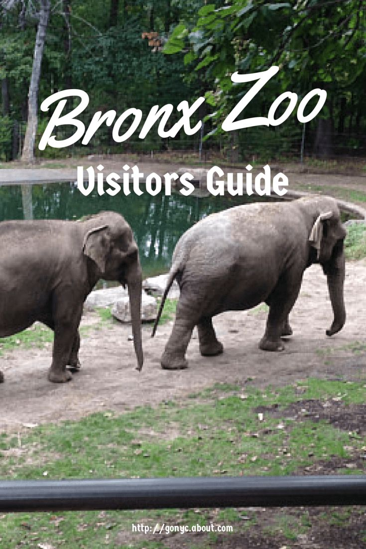Central park zoo wildlife logo clipart black and white 17 best ideas about Bronx Zoo on Pinterest | New york city ... black and white
