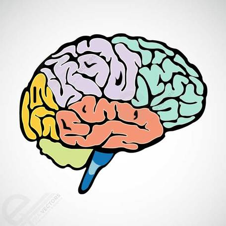 Parts of the brain clipart jpg freeuse library Graphismes vectoriels et Clipart Cerveau humain gratuits - Clipart.me jpg freeuse library