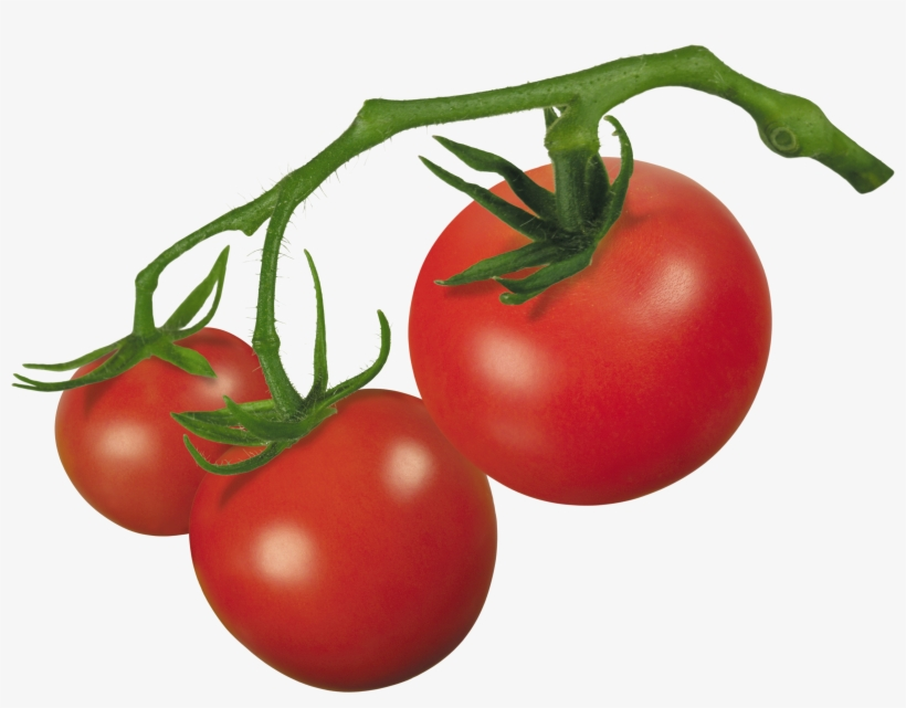 Tomatoes on the vine clipart image freeuse Vector Royalty Free Library Crude Drawing Tomatoes - Tomato On Vine ... image freeuse