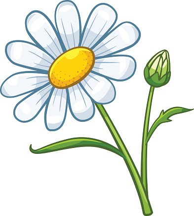 Chamomile clipart png free library Chamomile Cartoon Style premium clipart - ClipartLogo.com png free library