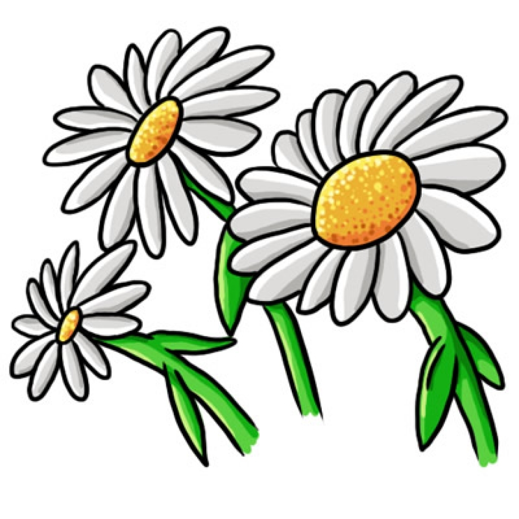 Chamomile clipart b&w png stock Daisy Clipart Black And White | Free download best Daisy Clipart ... png stock