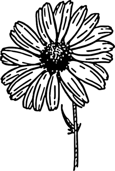 Chamomile clipart b&w svg transparent Free Spring Cliparts BW, Download Free Clip Art, Free Clip Art on ... svg transparent