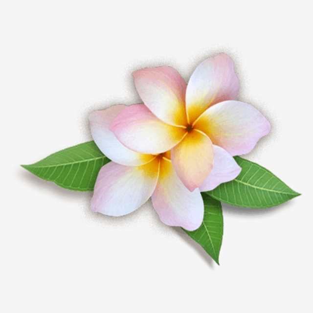 Champa Flower 12 In Asia Of Laos Pdr, Vector, New Year, Laos PNG ... picture royalty free library