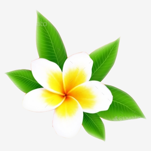 Champa Flower 11 In Asia Of Laos Pdr, Background, Beautiful, Beauty ... vector transparent download