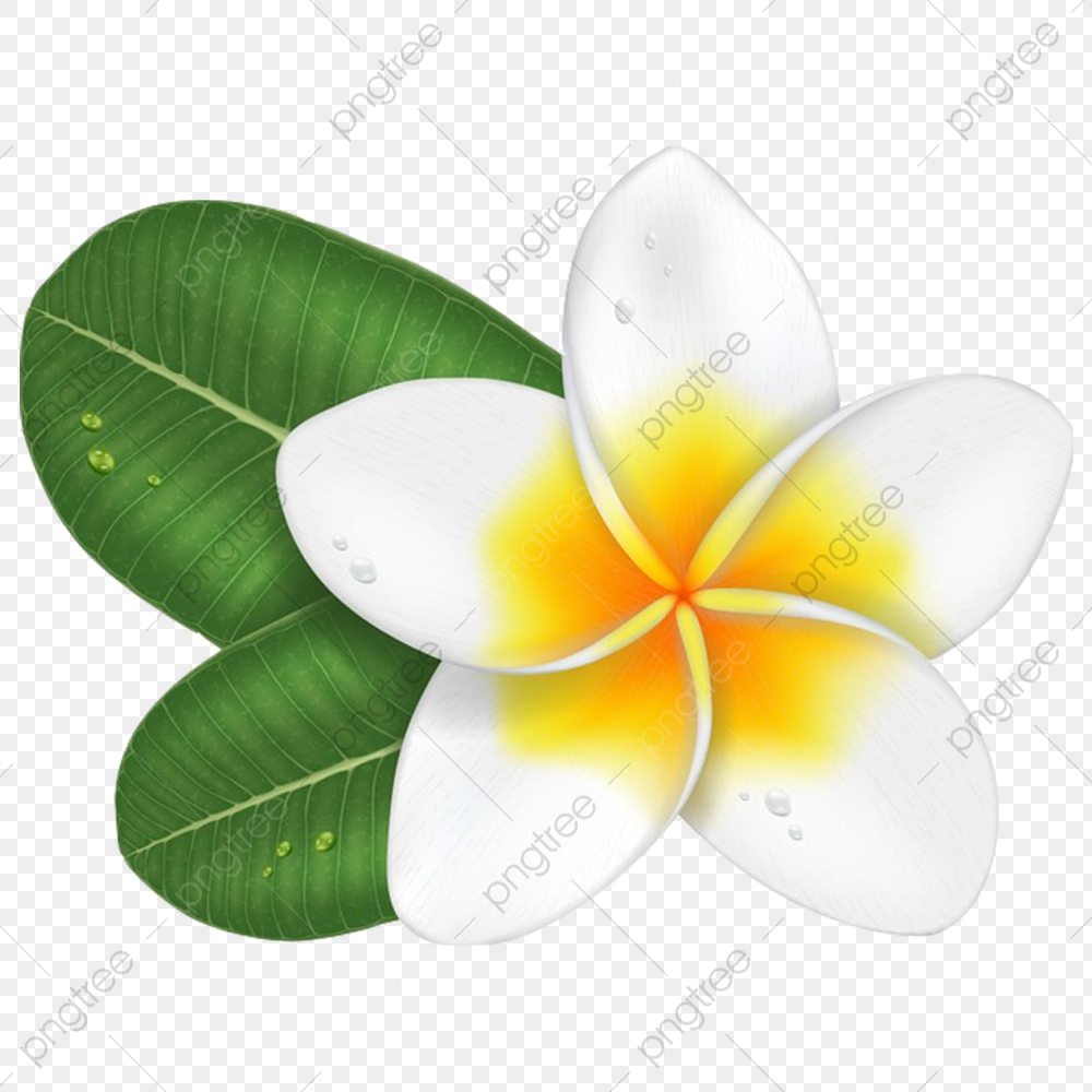Champa Flower 1, Laos, Thai, Line PNG Transparent Clipart Image and ... clip freeuse library