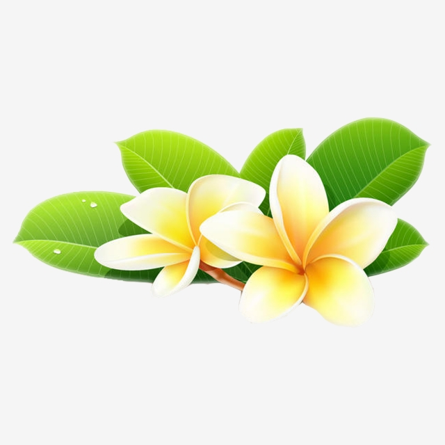 Champa Flower 9, Laos, Thai, Line PNG Transparent Clipart Image and ... clip art library download