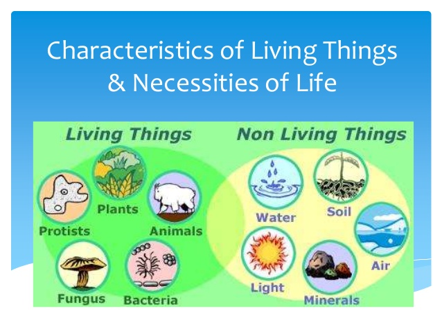 Characteristics of life clipart clipart freeuse download Download non living things in an ecosystem clipart Ecosystem Abiotic ... clipart freeuse download