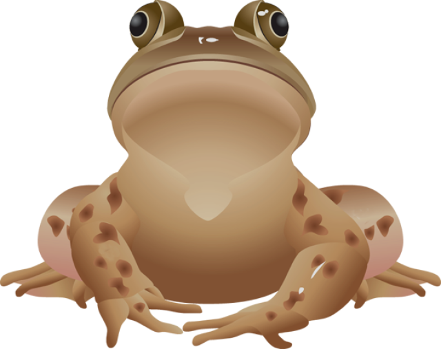 Charli brown thanksgiving clipart image free download 28+ Collection of Brown Frog Clipart | High quality, free cliparts ... image free download