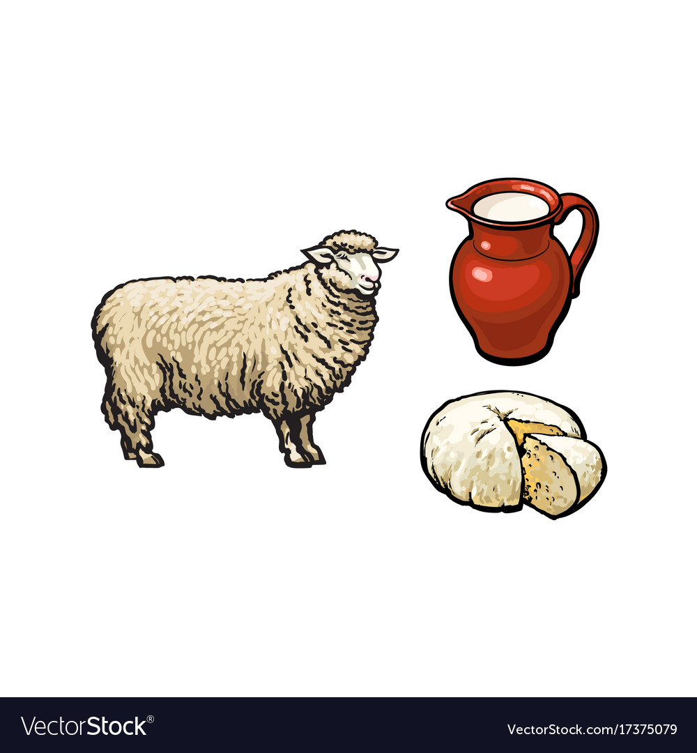Cheese drawn isolated clipart clipart free download Sketch sheep milk and cheese set isolated clipart free download