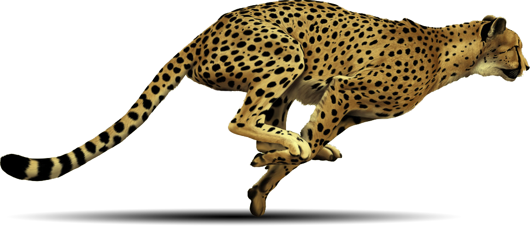 Cheetah book clipart png freeuse HQ Cheetah PNG Transparent Cheetah.PNG Images. | PlusPNG png freeuse