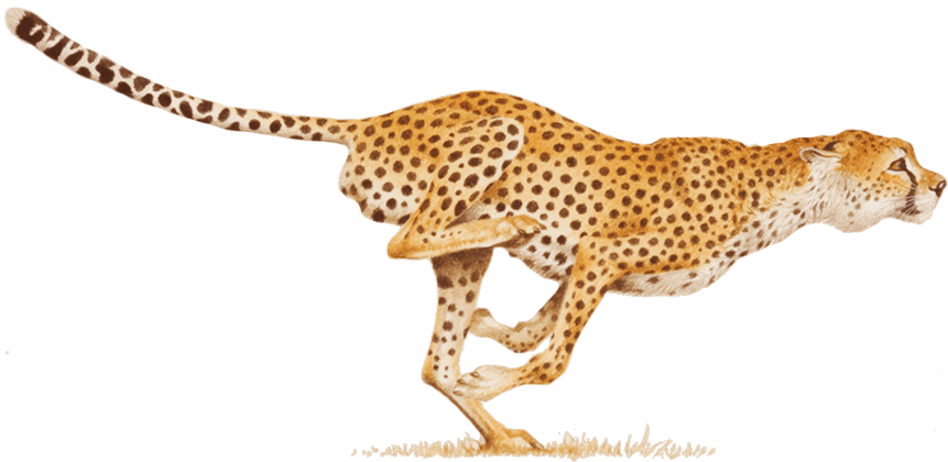 Cheetah book clipart picture freeuse library HQ Cheetah PNG Transparent Cheetah.PNG Images. | PlusPNG picture freeuse library