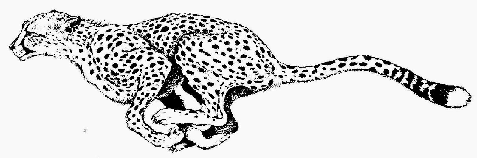 Cheetah print black and white clipart jpg black and white stock Cheetah print black and white clipart kid - Clipartix jpg black and white stock