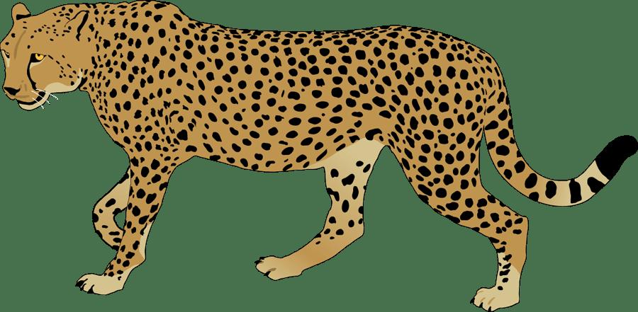 Cheetahs clipart download Cheetahs clipart 4 » Clipart Portal download