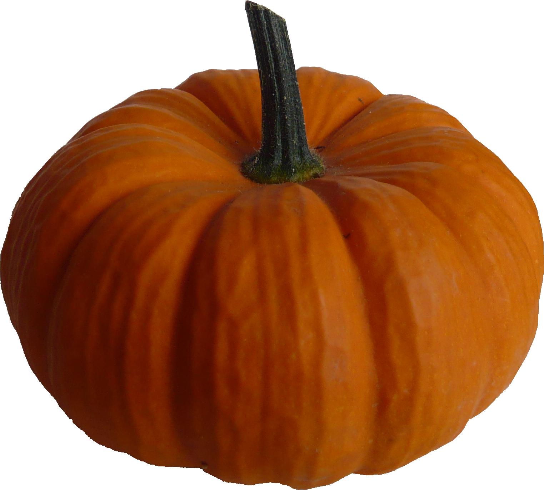 Real pumpkin clipart banner stock Pumpkin PNG Transparent Pumpkin.PNG Images. | PlusPNG banner stock