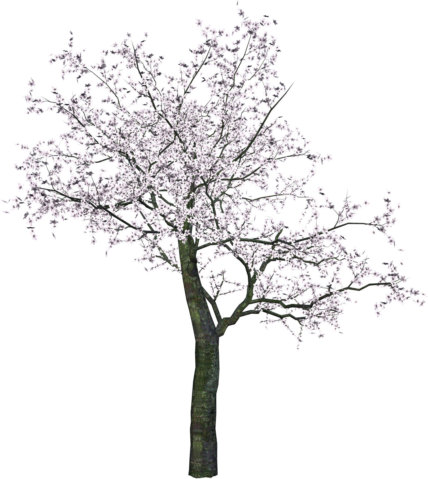 Cherry blossom tree clipart black and white image transparent stock Cherry Tree PNG Transparent Image | diseño | Pinterest | Cherry tree image transparent stock