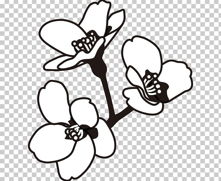 Cherry blossom clipart black and white svg library download Black And White Monochrome Painting Line Art PNG, Clipart, Black ... svg library download