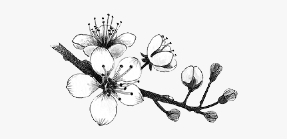 Cherry blossom clipart black and white svg Cherry Blossom Clipart Transparent Tumblr - Cherry Blossom ... svg
