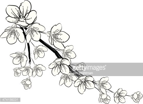 Cherry blossom clipart black and white transparent library Cherry Blossoms Black and White premium clipart - ClipartLogo.com transparent library