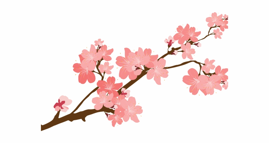 Cherry blossom clipart images image transparent download Sakura Clipart Transparent - Cherry Blossom Japan Clipart Png ... image transparent download