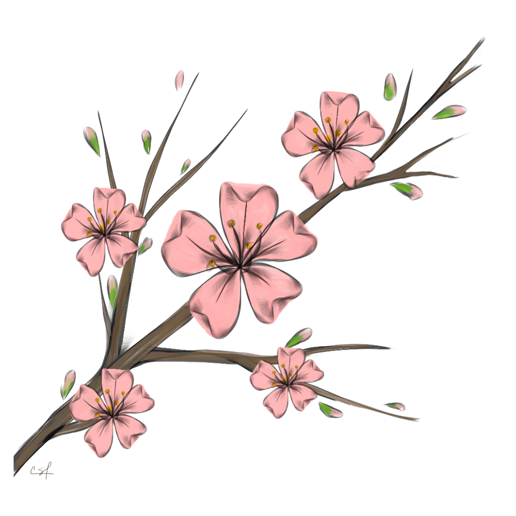 Cherry blossom flower clipart picture stock cherry blossom flowers branshes freetoedit... picture stock