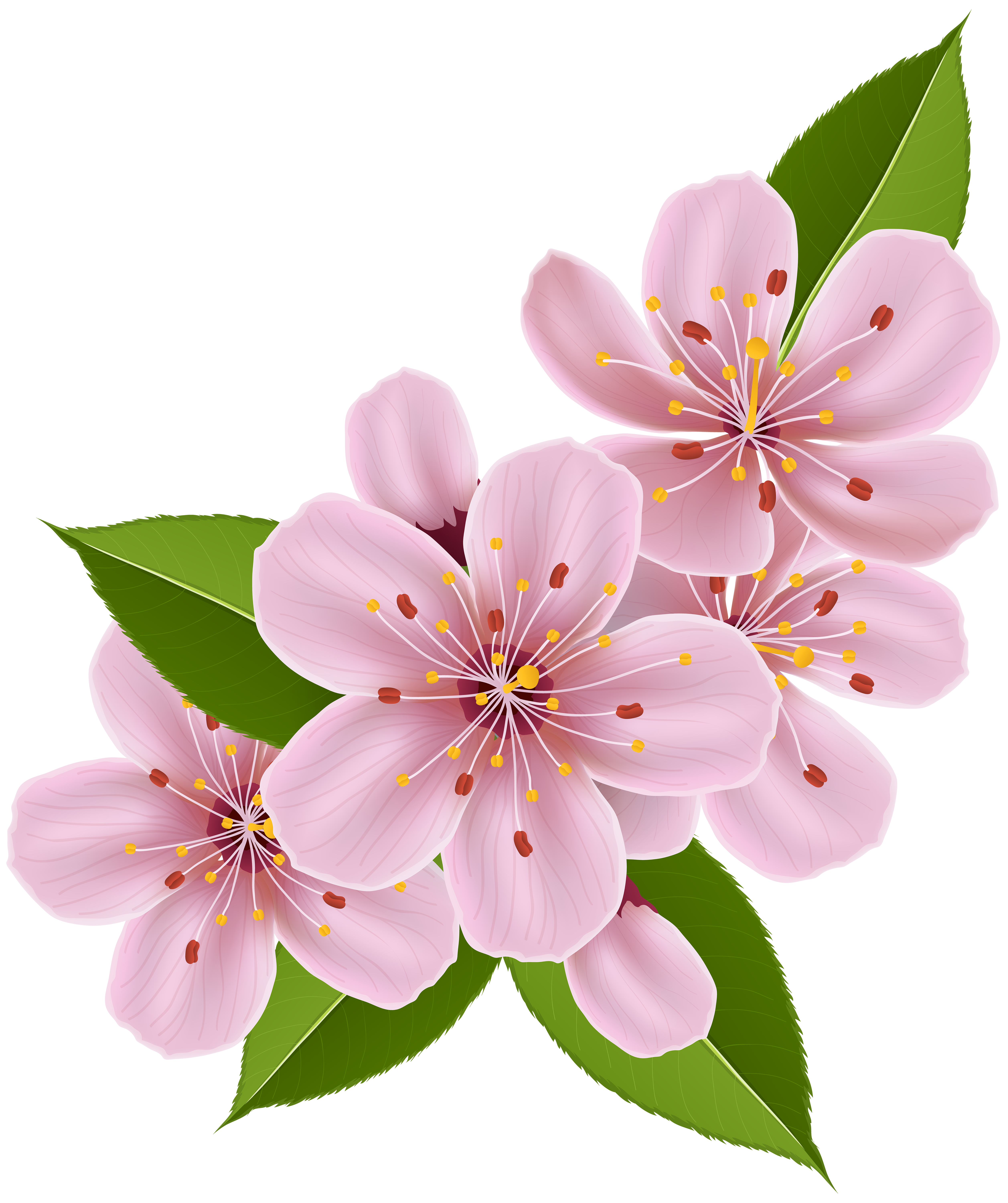 Spring flower clipart free vector black and white download Spring Cherry Blossom Flowers PNG Clip Art Image   Gallery ... vector black and white download