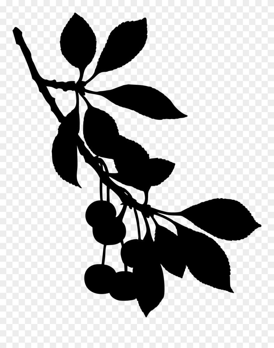 Cherry blossom silhouette clipart image black and white library Sour Cherry Tree Cherry Blossom Fruit - Black And White Cherry ... image black and white library