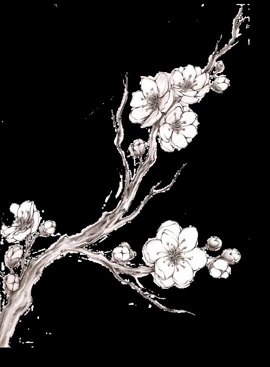 Cherry blossom tree clipart black and white clip black and white Résultat de recherche d'images pour