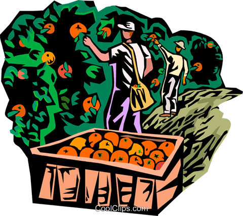 Cherry picking clipart free image library picking fruit Royalty Free Vector Clip Art illustration -vc001817 ... image library