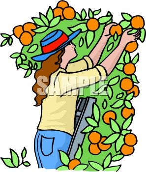 Berry picking clipart picture transparent download Apple Picking Clipart | Free download best Apple Picking Clipart on ... picture transparent download