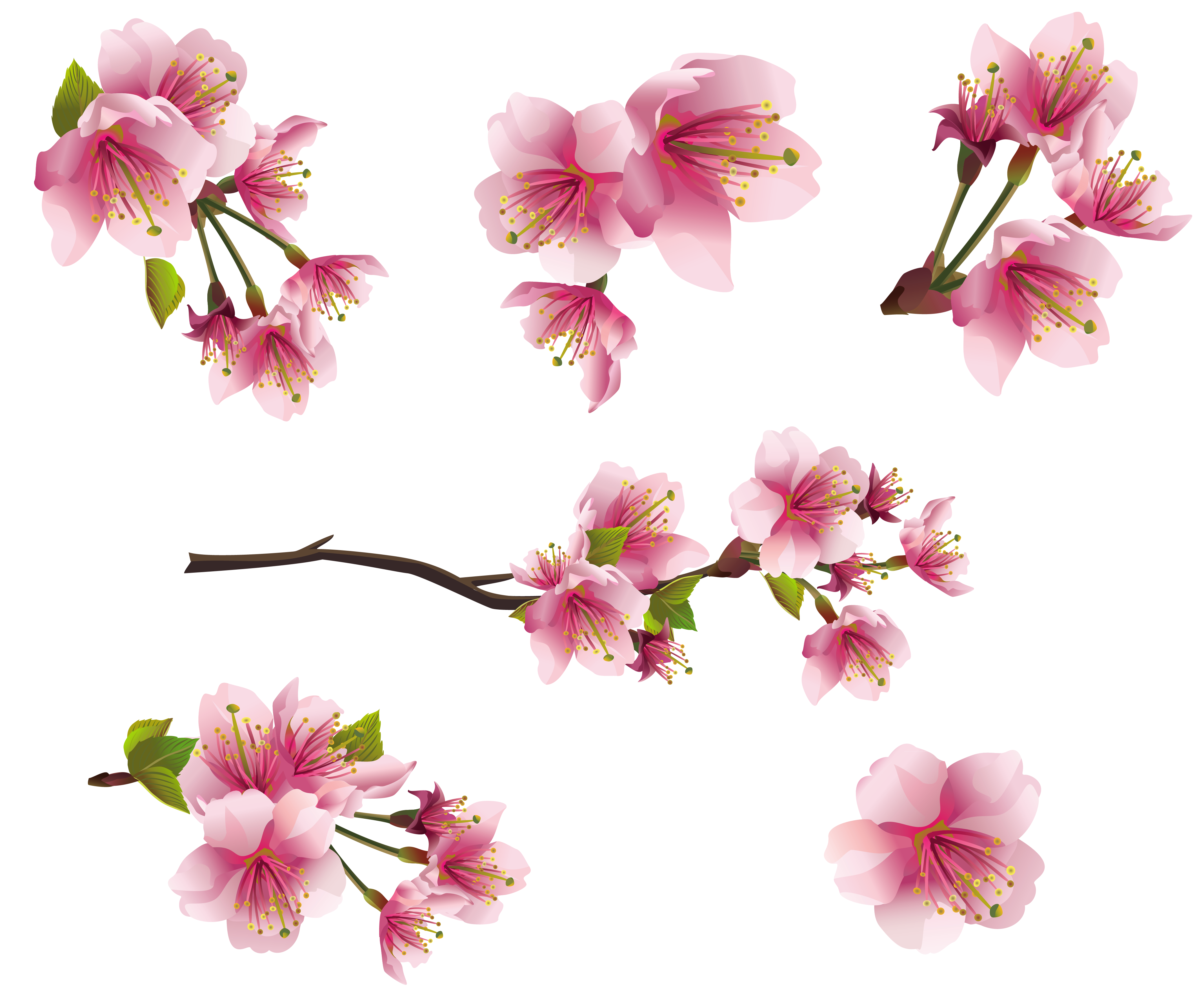 Tiny flower clipart vector free download Pics Photos Gallery Free Clipart Picture Spring Png Spring Pink ... vector free download
