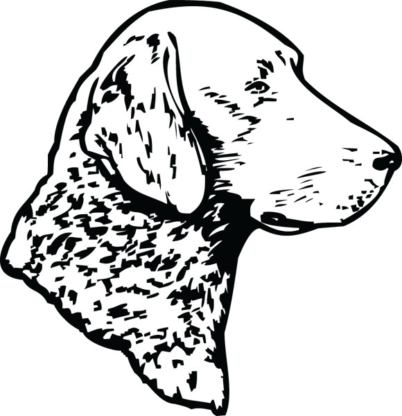 Chesapeake bay retriever clipart clipart royalty free stock Free Chesapeake Cliparts, Download Free Clip Art, Free Clip Art on ... clipart royalty free stock