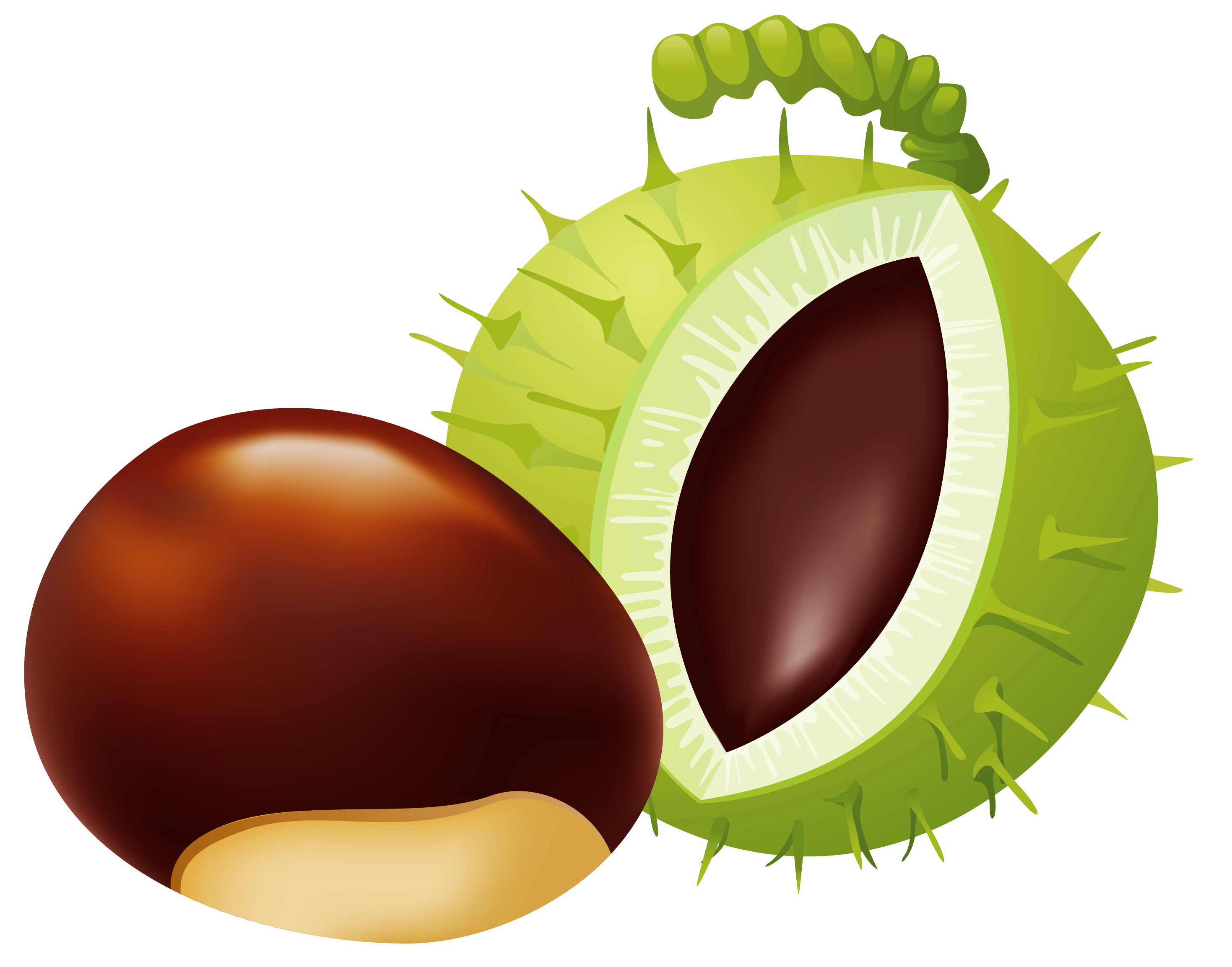 Chestnut clipart clip free stock Chestnut PNG Clip Art - Best WEB Clipart clip free stock