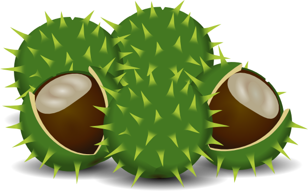 Chesnut clipart vector freeuse Free Chestnut Tree Cliparts, Download Free Clip Art, Free Clip Art ... vector freeuse