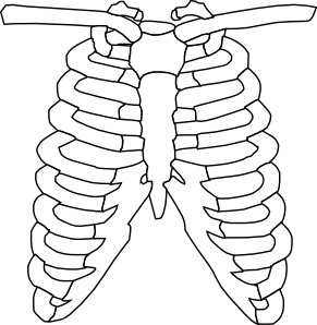 Chest xray clipart picture download Chest Xray Cliparts - Cliparts Zone picture download
