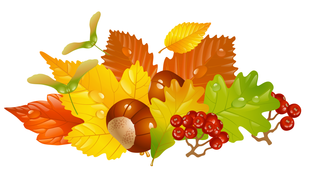 Chestnut tree clipart clip free Transparent Fall Leaves and Chestnuts Picture | Gallery ... clip free