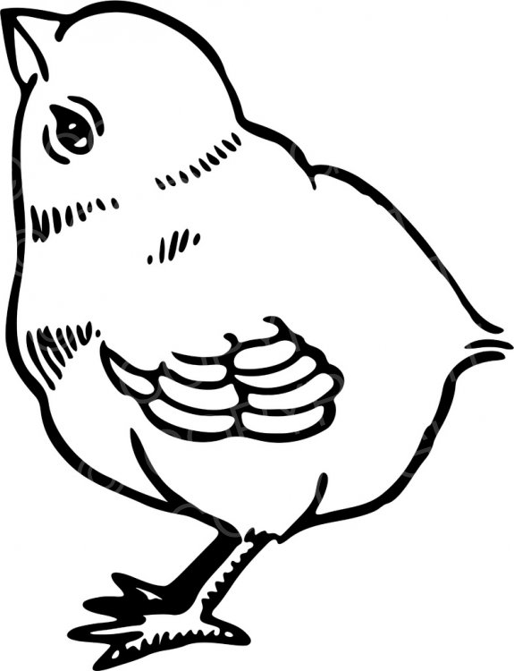 Chick clipart black and white banner royalty free stock Black & White Line Drawing of a Cute Fluffy Chick Prawny Animal Clip ... banner royalty free stock