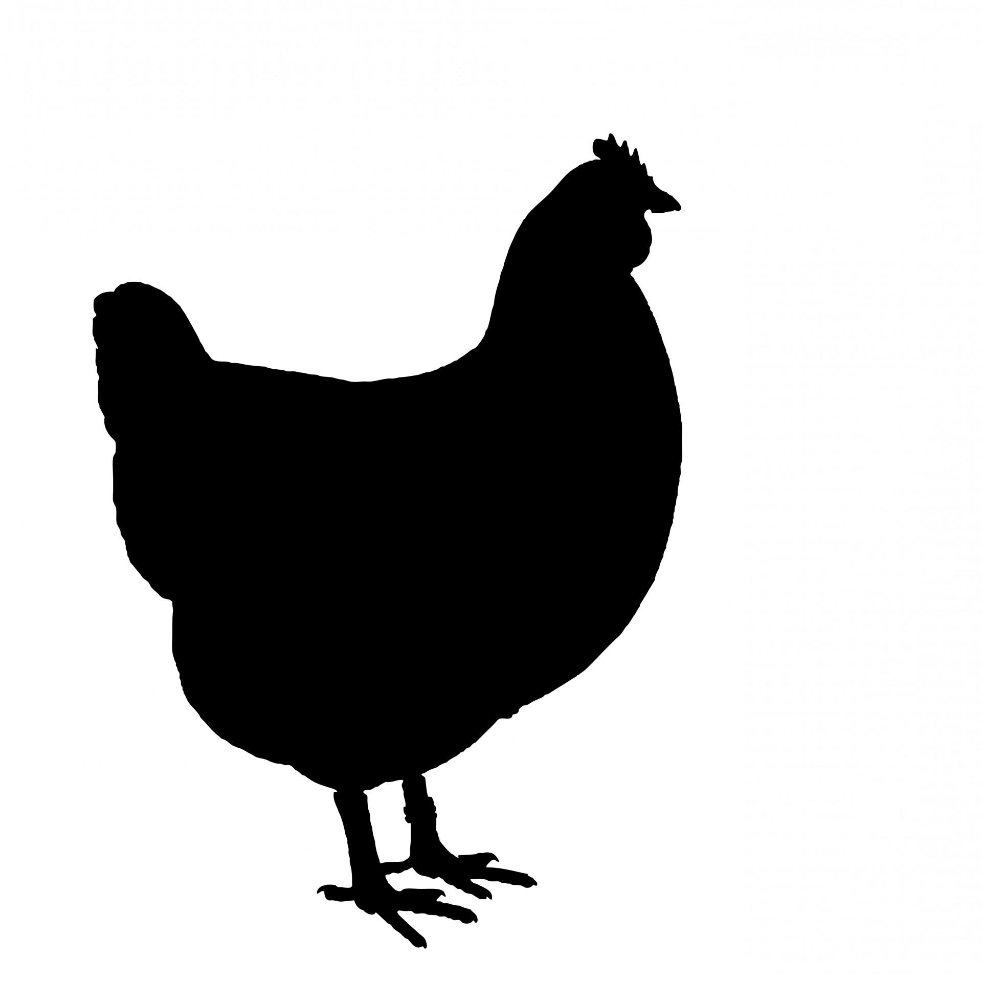 Chicken black clipart clipart Black And White Chicken Clipart | Free download best Black And White ... clipart