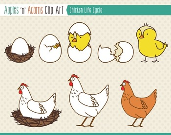 Clipartfest chick . Chicken life cycle clipart