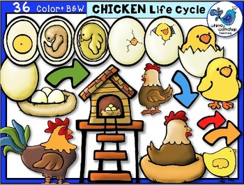 Chicken life cycle clipart. Clip art graphics by