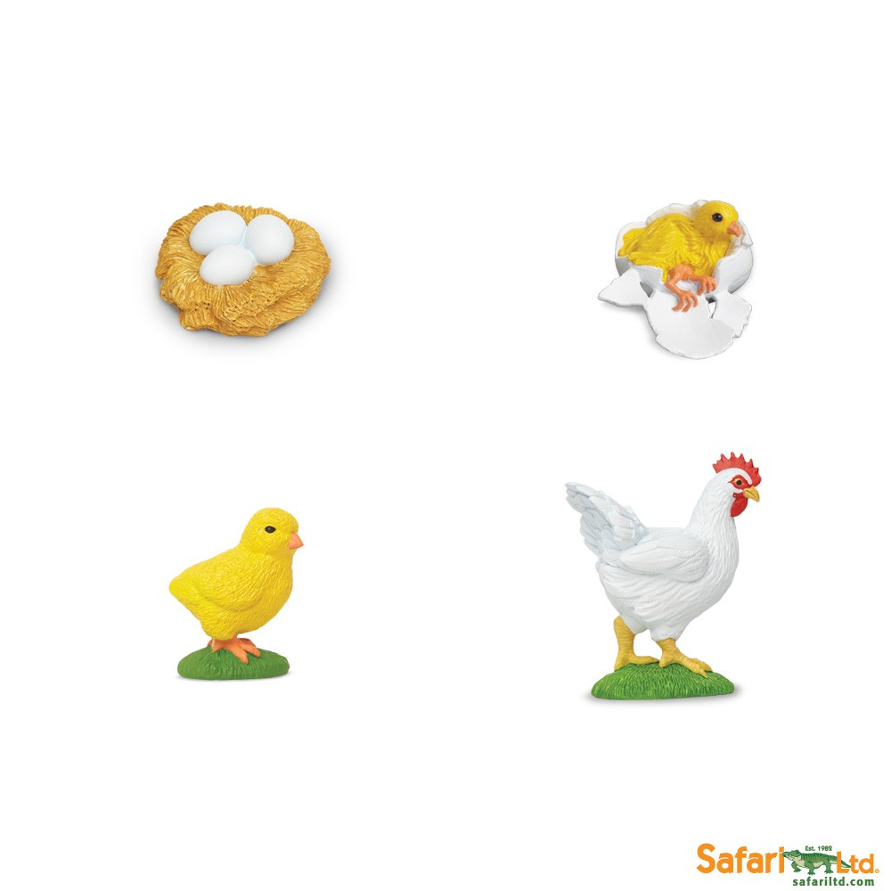 Of a clipartfest. Chicken life cycle clipart