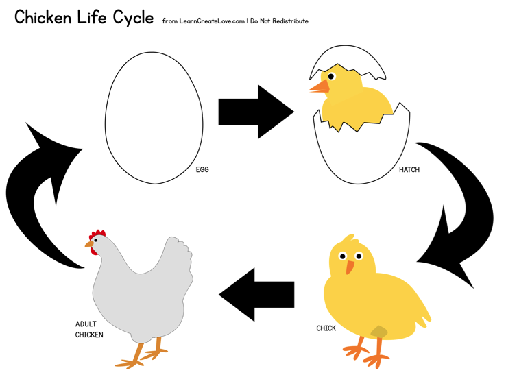 Chicken life cycle clipart. Chick download books to