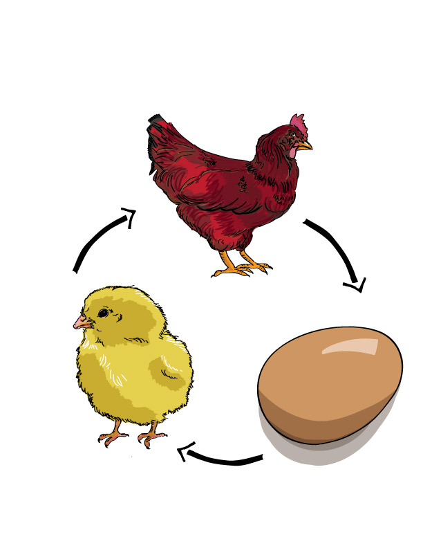 Of a clipartfest chickens. Chicken life cycle clipart