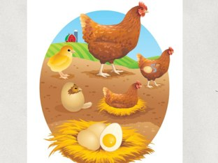 Chicken life cycle clipart graphic transparent download Play Chicken Life Cycle by Academic Tech - Games on TinyTap graphic transparent download