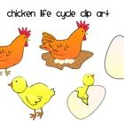 Clip art pictures of. Chicken life cycle clipart