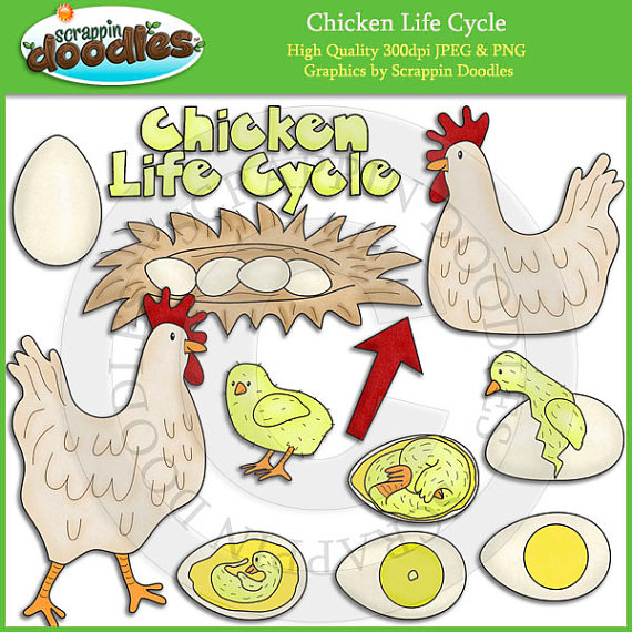 Chicken life cycle clipart freeuse download Life Cycle Clip Art freeuse download